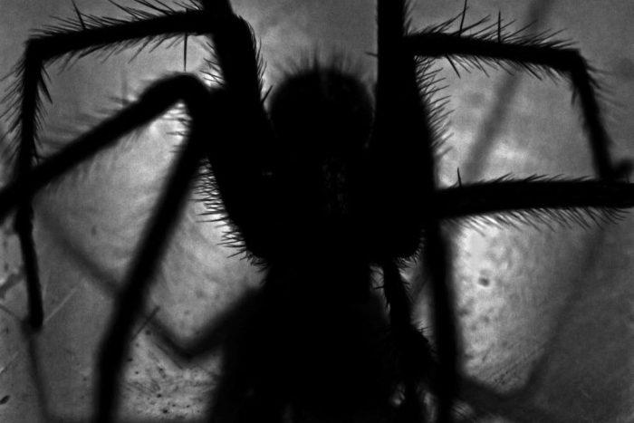spider--1010x675